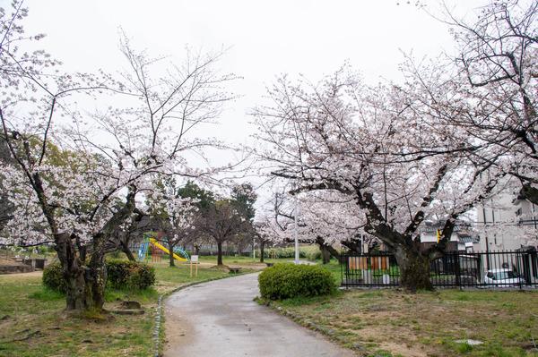 桜329-2103283