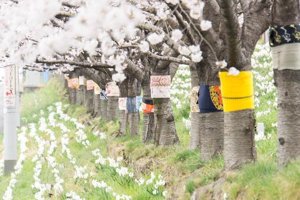 桜-1704065