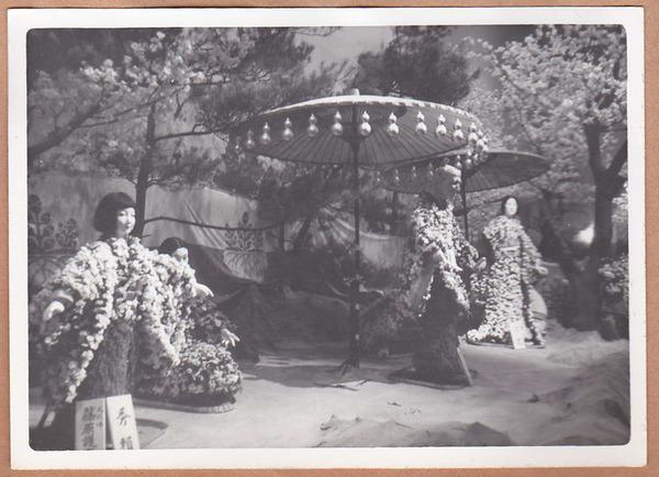 昭和37年菊人形
