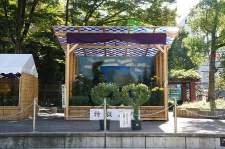 121029菊フェスティバル2012_06
