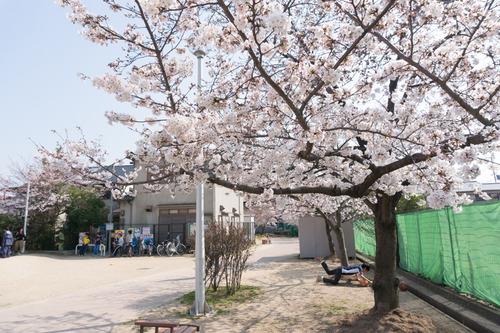 南中振公園桜-1503315