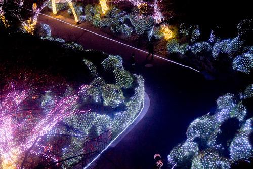 ひらかたパーク光の遊園地-15111168
