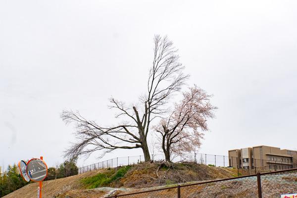 桜-2003304