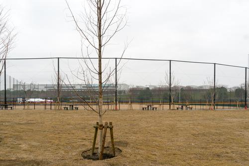 東部公園-15032925