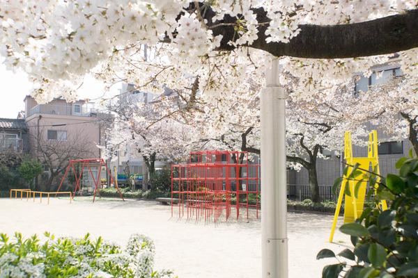 桜2-1803271