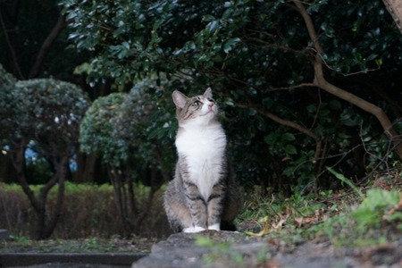 猫20131028171932