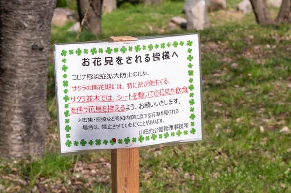 山田池桜の道-2103231-7