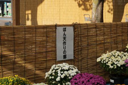 菊花展131105-14
