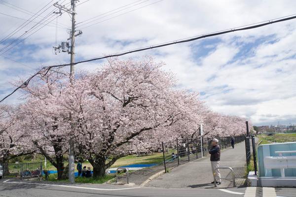 船橋川緑地-1604021