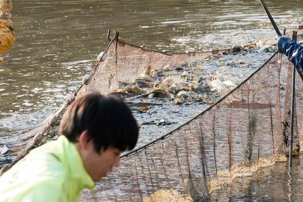 池の水全部抜く-18012026