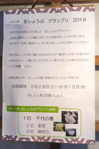 花しょうぶ-16060414