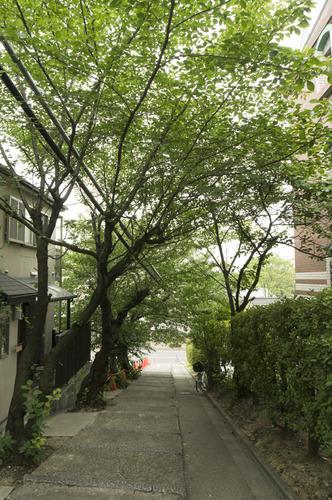 百済王神社の桜-17