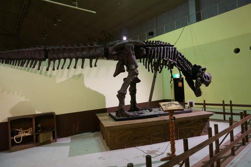 ひらパー恐竜大冒険-31
