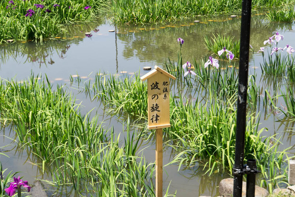 山田池公園-18052511
