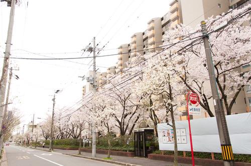 20150403くずは桜-8