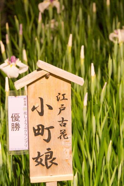 山田池公園-17060310