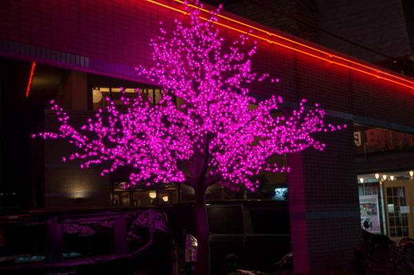 桜祭-1803271-2