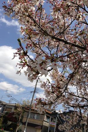 甲斐田公園130408_02