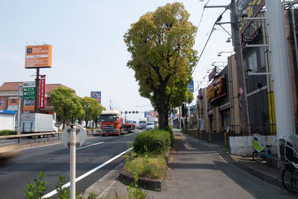 ドン・キホーテ-2004164
