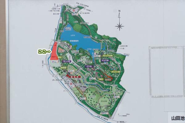 山田池公園-1705169