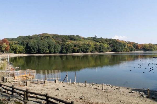 池の水ぜんぶ抜く5-1711272
