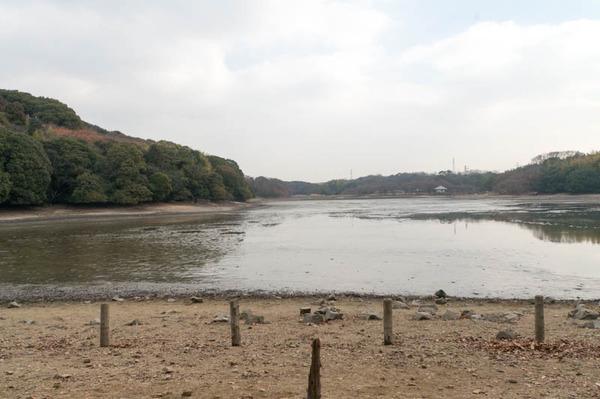池の水全部抜く-18012061