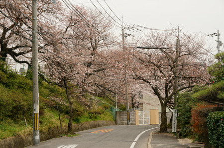 大阪市立高校の桜130327-03