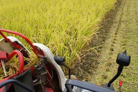 村野の米18