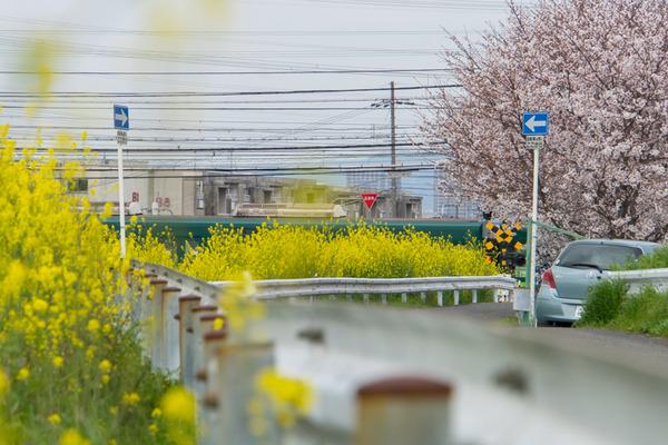 桜-2003315