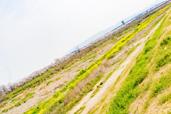 桜-2004032