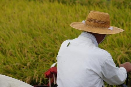 村野の米13