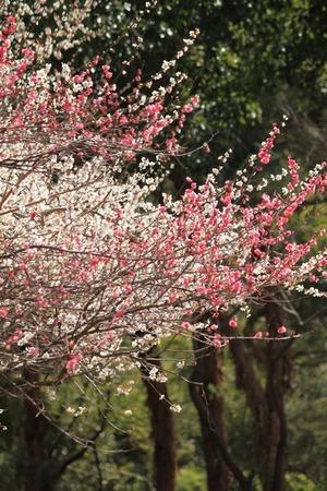 山田池公園130315_01