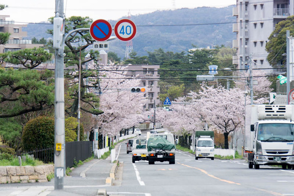 桜2-1704124