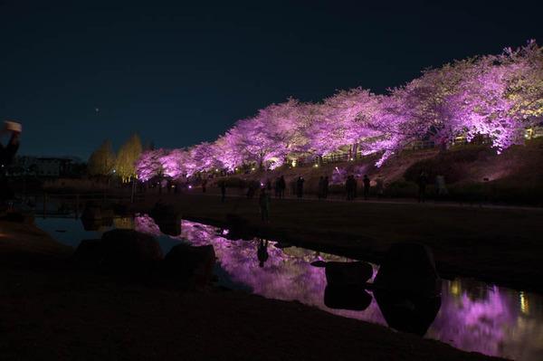 寝屋川桜-18033013