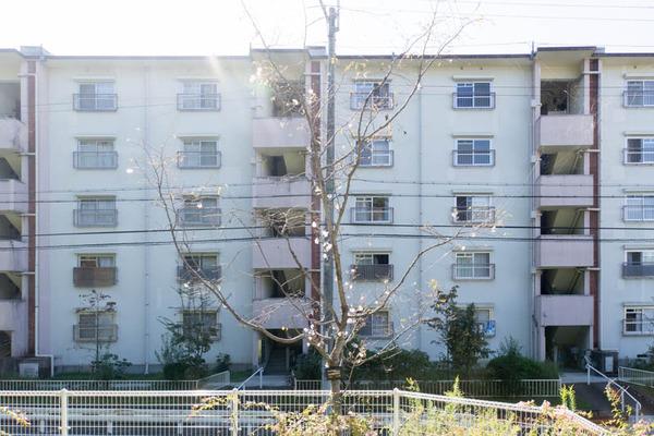 桜-1610245
