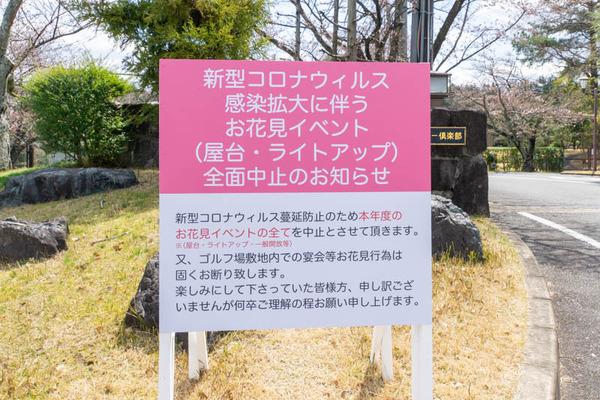 桜-2003241