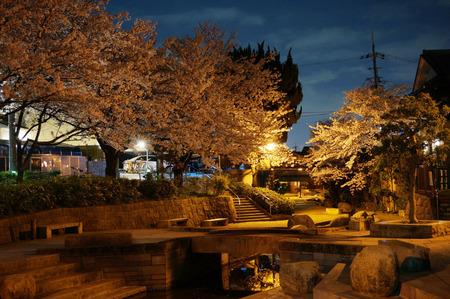 水面廻廊の夜桜130403-02