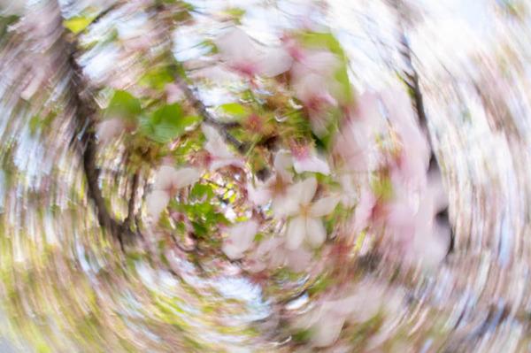 桜1-2104023