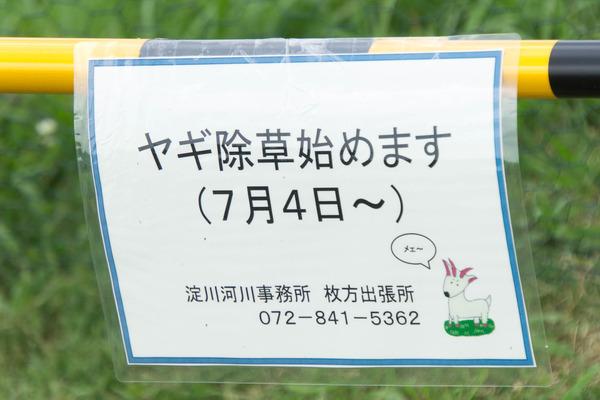 ヤギ-16070711