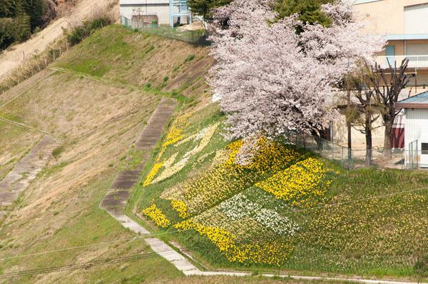 桜-1803291