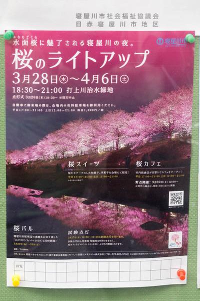桜のライトアップ-1903121