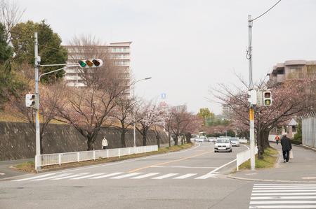 香里ヶ丘の桜-4