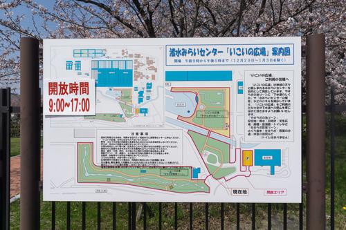 桜-15033102