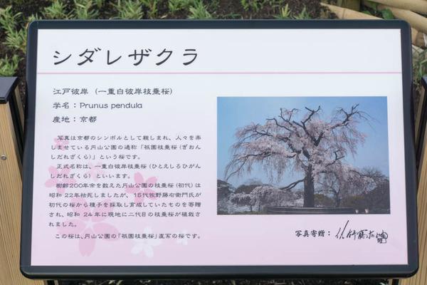 山田池公園-17052516