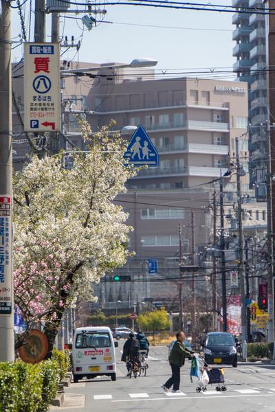 桜-2003265