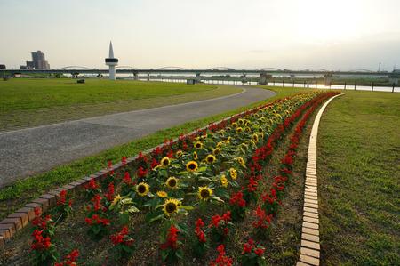 淀川河川公園130701-03
