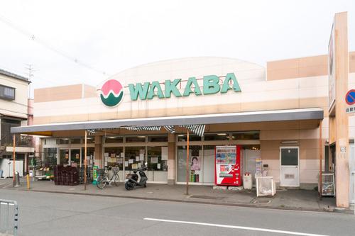 ワカバ-15030302