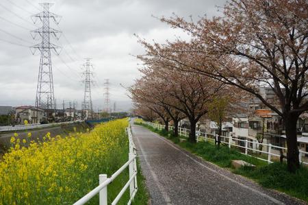 穂谷川の桜130406-01