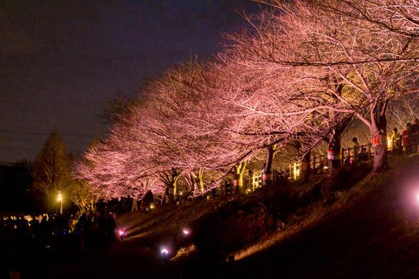 寝屋川桜-17032536