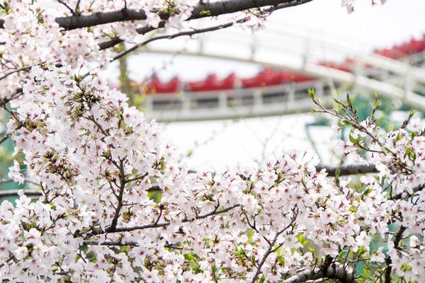 桜2-1704128